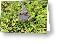 Baby Gator Greeting Card by Adam Jewell