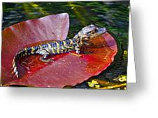 Baby Gator  Greeting Card