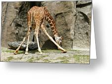 Baby Giraffe 1 Greeting Card