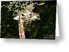 Baby Giraffe 2 Greeting Card