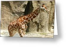 Baby Giraffe 4 Greeting Card