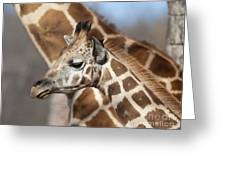 Baby Giraffe And Mother Greeting Card