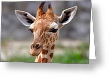 Baby Giraffe Greeting Card