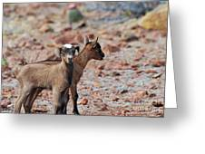 Baby Goat Pair Greeting Card