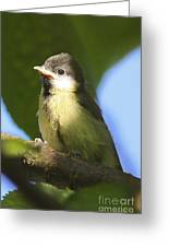 Baby Coal Tit Greeting Card