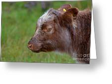 Baby Highland Cow Greeting Card