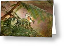 Baby Hummingbird In The Forest Greeting Card