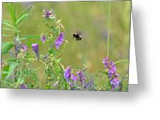 Baby Hummingbird Moth In Flight Greeting Card