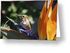 Baby Hummingbird On Flower Greeting Card