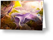 Baby Hydrangeas Greeting Card