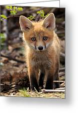 Baby In The Wild Greeting Card