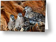 Baby Inca Doves Greeting Card