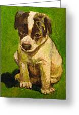 Baby Jack Russel Greeting Card
