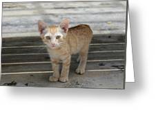 Baby Kitty Greeting Card