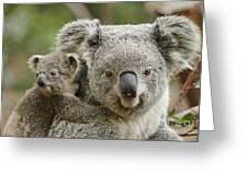 Baby Koala With Mom Greeting Card