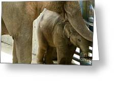 Baby Lily Elephant Greeting Card