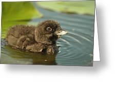 Baby Loon Greeting Card
