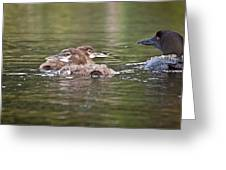 Baby Loons And Mom Greeting Card