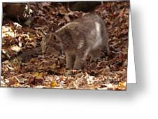 Baby Lynx Hunting In An Autumn Forest Greeting Card