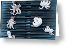 Baby Octopus - Moscardini - On Bbq Greeting Card