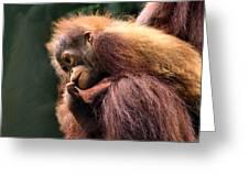 Baby Orangutan Borneo Greeting Card