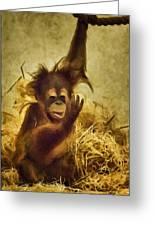 Baby Orangutan At The Denver Zoo Greeting Card