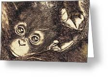Baby Orangutan Greeting Card