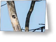 Baby Red-headed Woodpecker Greeting Card