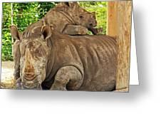 Baby Rhino And Mom Greeting Card