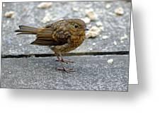 Baby Robin Feeding Greeting Card