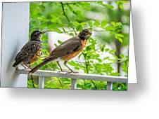 Baby Robin - Ready...just Do What I Do Greeting Card