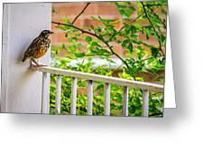Baby Robin - Such A Big World Greeting Card