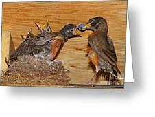 Baby Robins Feeding  An5141-14 Greeting Card