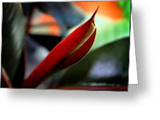Baby Rubber Tree Greeting Card by Aya Murrells