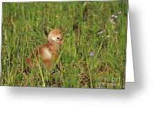 Baby Sandhill Crane Chick Greeting Card