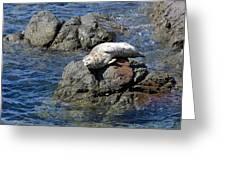 Baby Sea Lion On Rock At San Juan Island Greeting Card