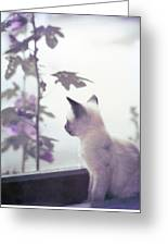 Baby Siamese Kitten Greeting Card