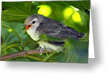 Baby Sparrow In The Maple Tree Greeting Card
