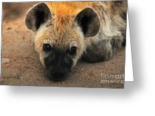 Baby Spotted Hyena Greeting Card