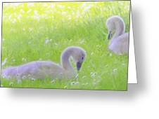 Baby Swans Enjoy A Summer Day Greeting Card