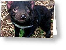 Baby Tasmanian Devil Greeting Card
