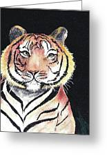 Baby Tiger Greeting Card