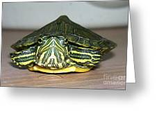 Baby Turtle Straight On Greeting Card