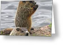 Baby Woodchucks Greeting Card