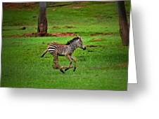 Baby Zebra Running Greeting Card