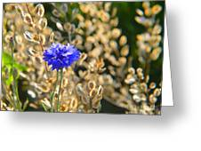Bachelor's Button 2014 Greeting Card
