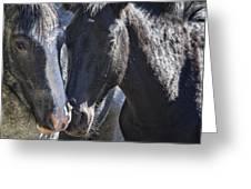 Bachelor Stallions - Pryor Mustangs Greeting Card