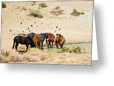 Bachelor Stallions And Birds Greeting Card