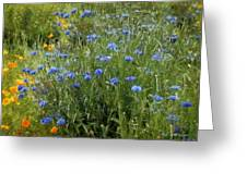 Bachelor's Meadow Greeting Card