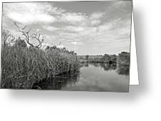 Back Bay In Bw Greeting Card